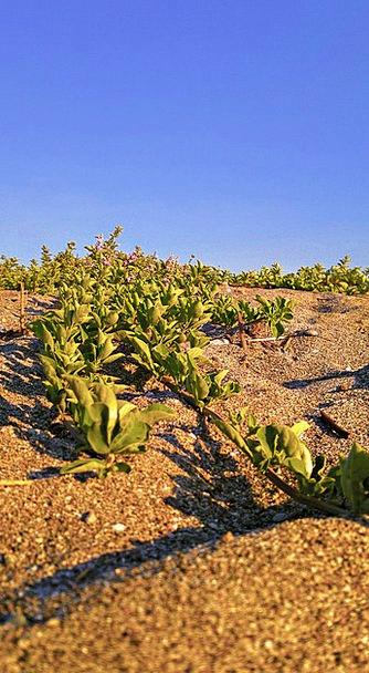 Sand Shingle Landscapes Scrubland Nature Dune Bank