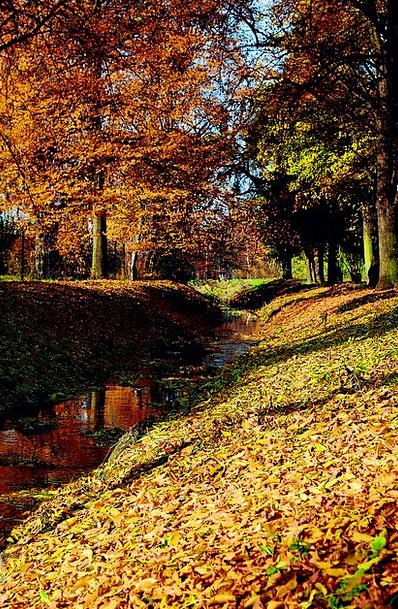 Autumn Fall Foliage Greenery The Brook Tree Saplin