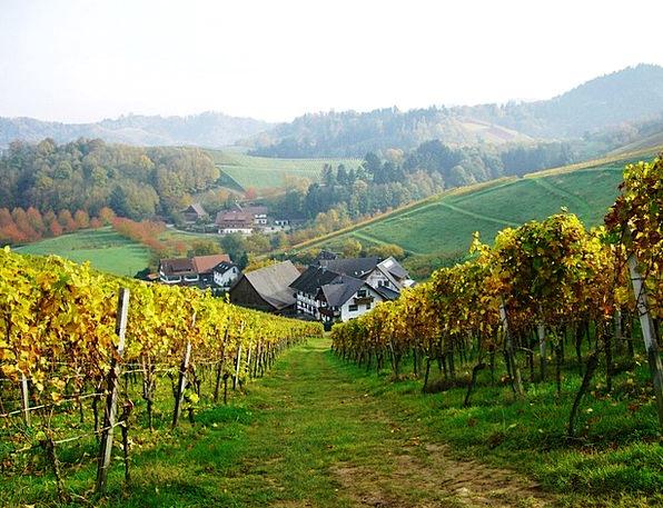 Vineyard Winery Bottenau Oberkirch Schlatten Dilge