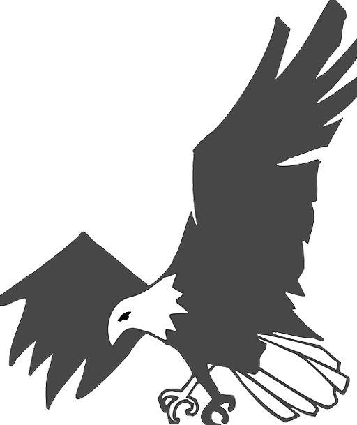 Eagle Dark White Snowy Black Powerful Bird Fowl Fe