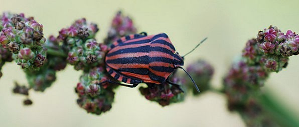 Insect Bug Bloodshot Black Dark Red Nature Country