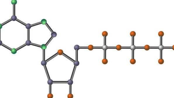 Molecule Particle Atp Nucleotide Ribose Adenosine