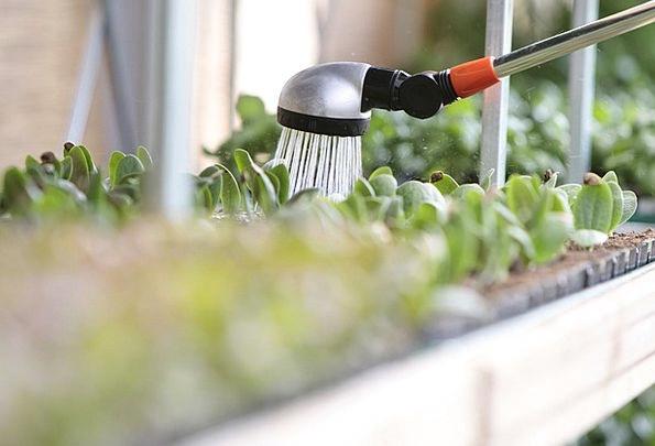 Watering Soaking Landscapes Aquatic Nature Plant V