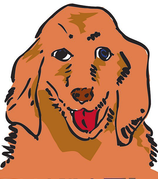 Dog Canine Domesticated Animal Physical Pet Happy