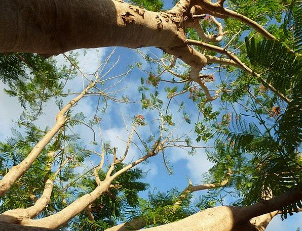 Tree Sapling Landscapes Greeneries Nature Sky Blue