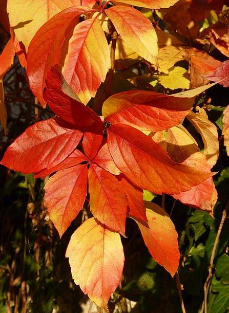 Emerge Arise Landscapes Nature Autumn Fall Wine Pa