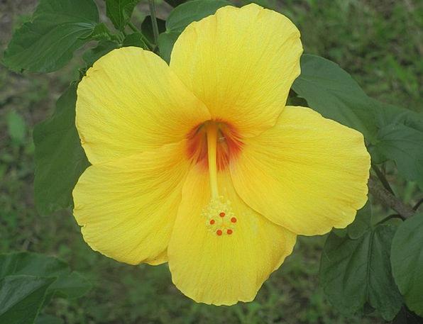Flower Floret Landscapes Plants Nature Yellow Flow