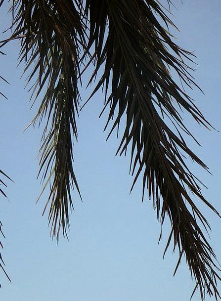 Palm Fronds Landscapes Tribute Nature Sky Palm Det