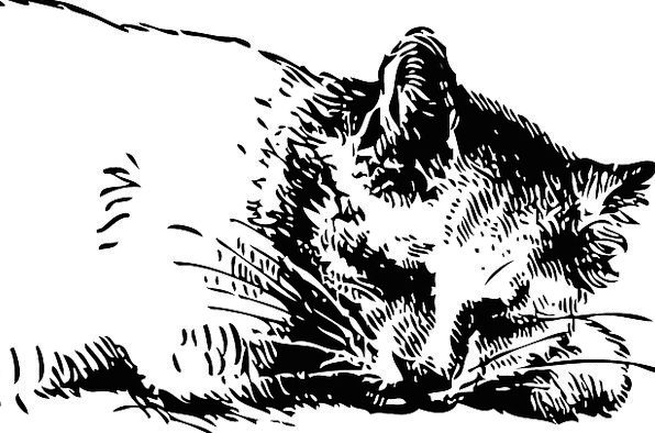 Cat Feline Asleep Pet Domesticated Sleeping Kitty