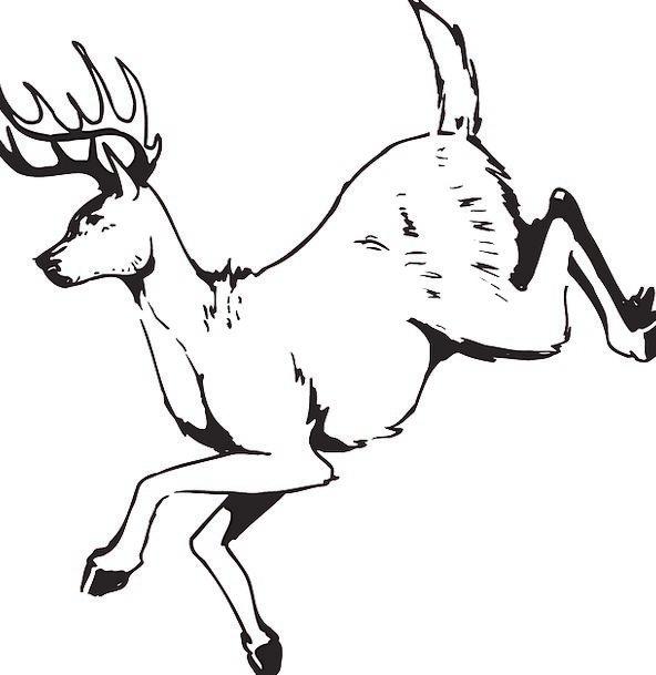 Deer Hopping Animal Physical Jumping Antlers Horns