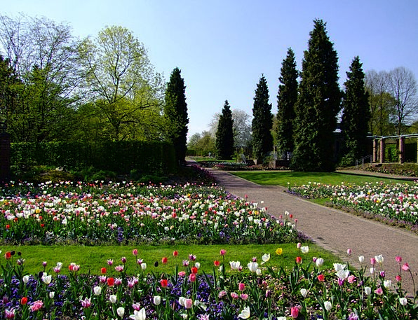 Flowers Plants Landscapes Coil Nature Tulips Sprin