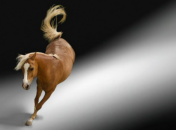 Horse Mount Physical Nature Countryside Animal Rid