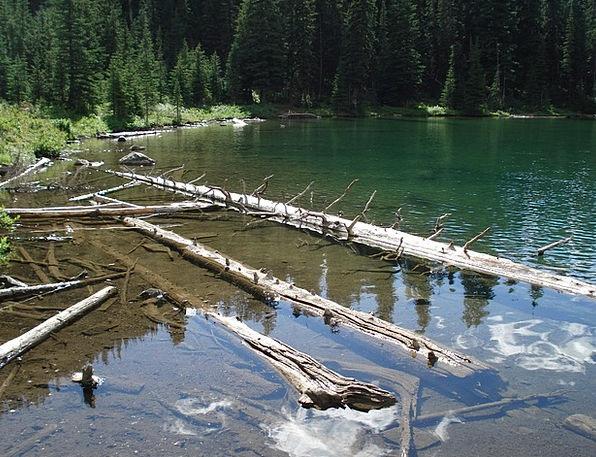 Drift Wood Aquatic Logs Woods Water