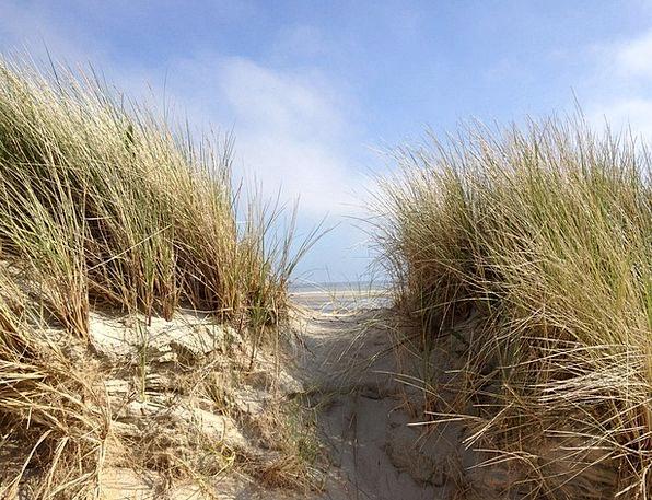 Dune Bank Vacation Travel Beach Seashore North Sea