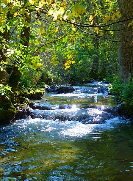Bach Landscapes Stream Nature River Creek Idyll Ni