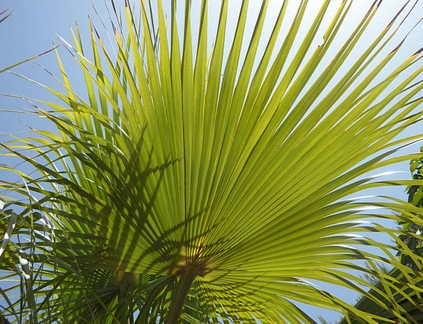 Fan Palm Structure Construction Light And Shadow S