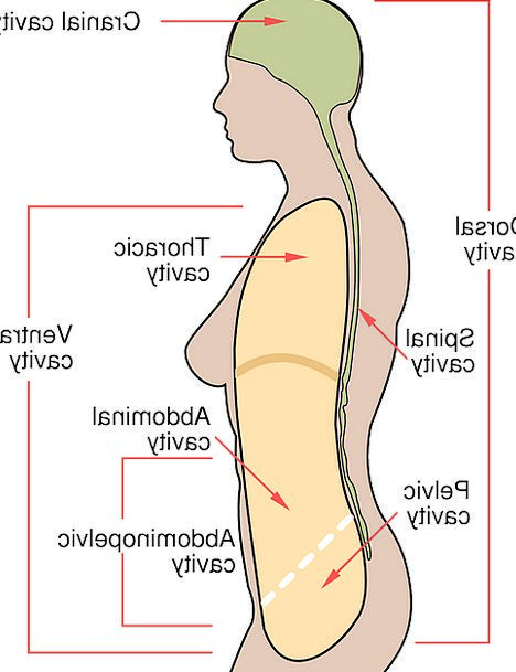 Human, Humanoid, Medical, Form, Health, Diagram, Drawing, Body ...