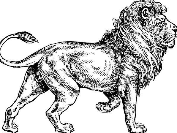Lion Rough Animal Physical Wild Predator Mane Shoc