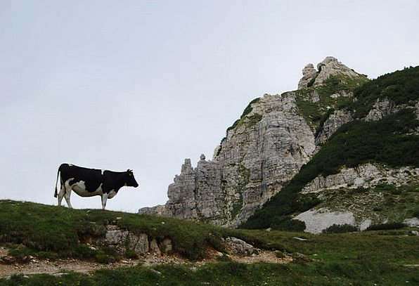 Cow Intimidate Landscapes Crag Nature Rock Pillar