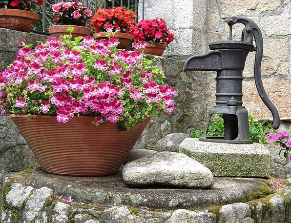 Flowers Aquatic Plants Florae Water Source Basis G