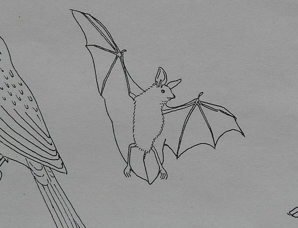 Bat Racket Physical Coloring Pages Animal Paint Dy