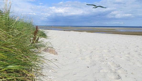 Coast Shore Landscapes Shingle Nature Holiday Brea