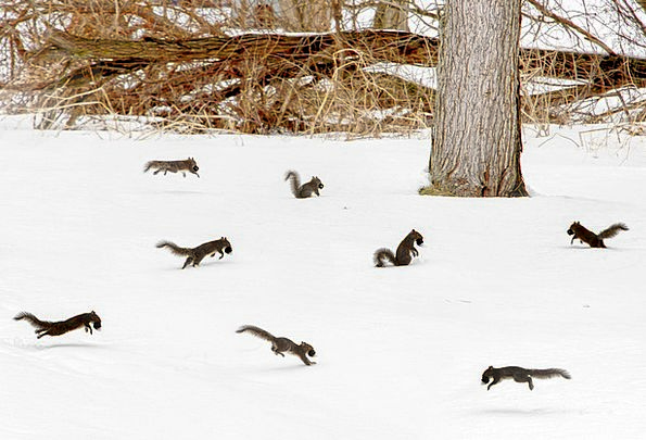 Squirrel Collector Gathering Scurry Dash Party Cra