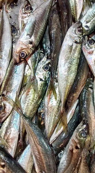 Fish Angle Sea Marine Horse Mackerel Fish Shop