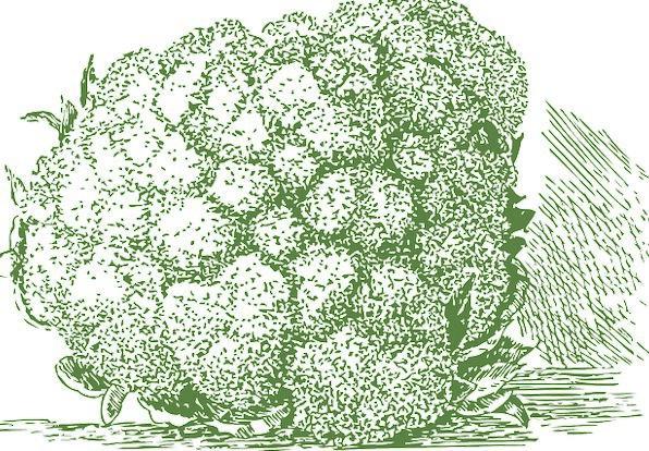 Cauliflower Drink Plant Food Veggie Lactovegetaria