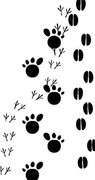 Footsteps Paths Footprint Footmark Tracks Path Ani