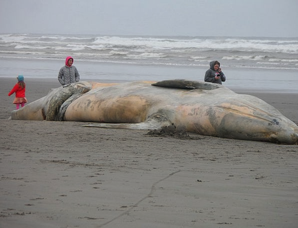 Beached Whale Vacation Coastal Travel Ocean Life S