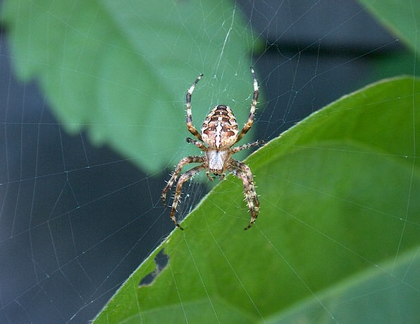 Spider Landscapes Countryside Nature Cobweb Nature