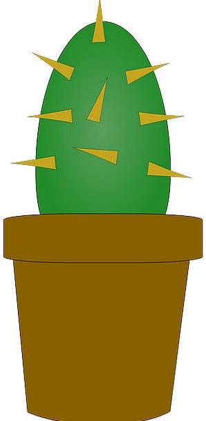 Cactus Landscapes Vessel Nature Plant Vegetable Po