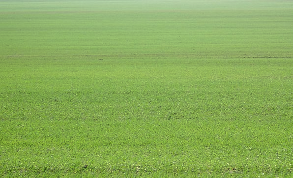 Field Arena Landscapes Lime Nature Meadow Green Gr