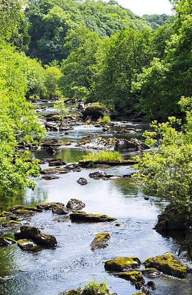 River Landscapes Aquatic Nature Green Lime Water T