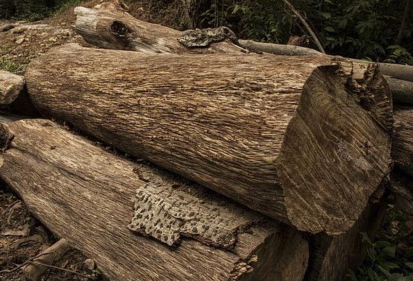 Wood Landscapes Woods Nature Woodpile Logs Pile Lu