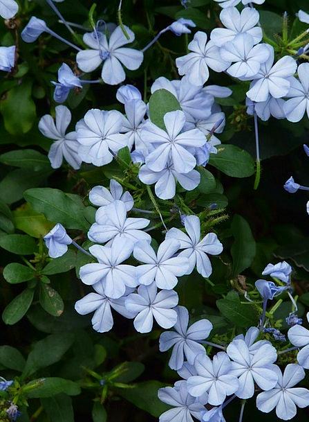 Auriculata Landscapes Plants Nature Flower Floret