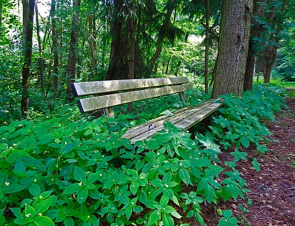 Bank Set Landscapes Woodland Nature Seat Chair For