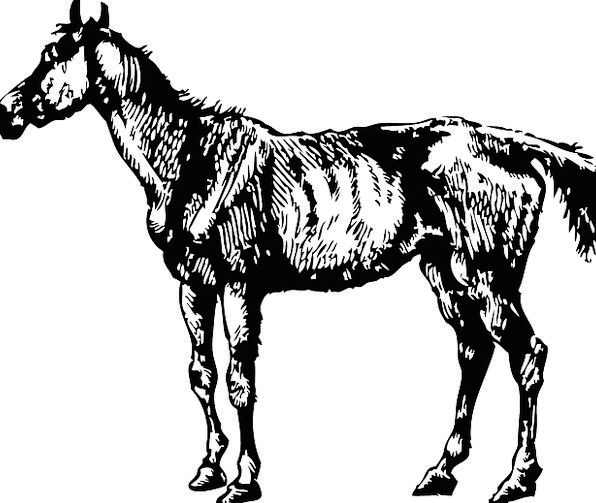 Horse Mount Physical Mammal Creature Animal Tired
