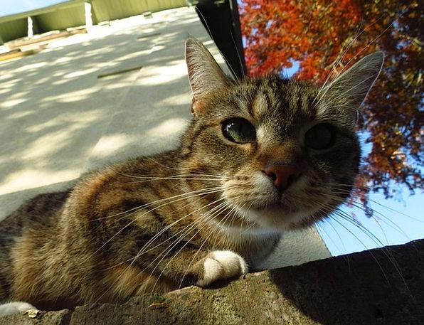 Animal Physical Feline Close-Up Detail Cat Pet Dom