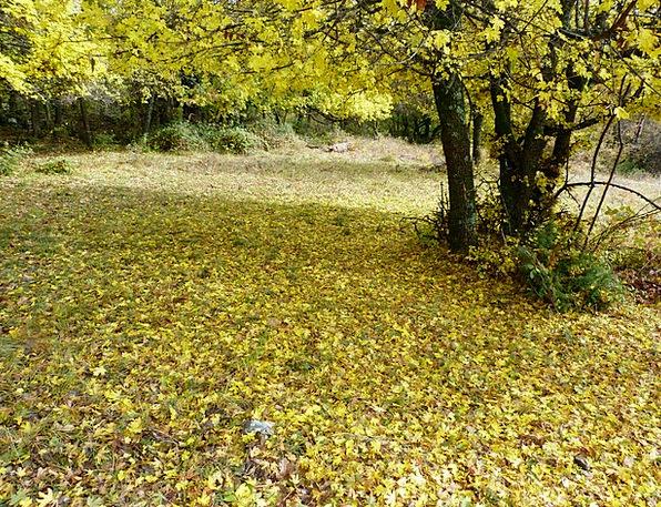 Garden Plot Landscapes Reduction Nature Leaves Gre