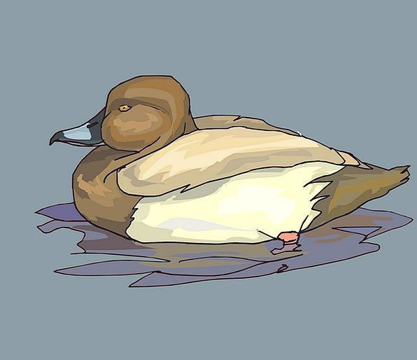 Water Aquatic Chocolate Bird Fowl Brown Duck Stoop