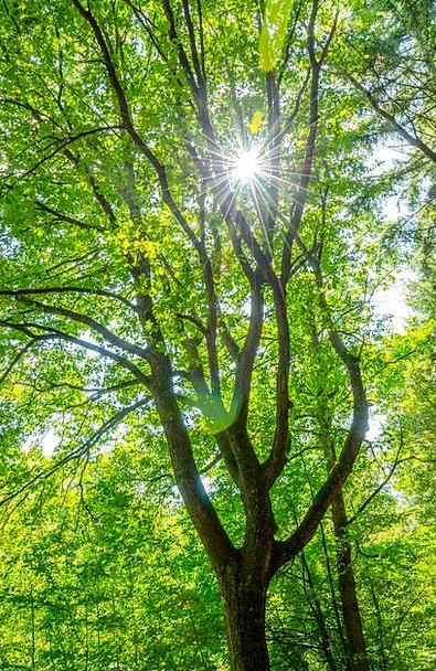 Tree Sapling Landscapes Nature Green Lime Sun Natu