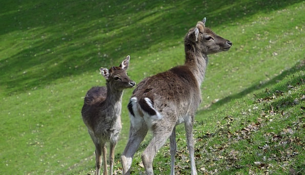 Roe Deer Landscapes Woodland Nature Antler Horn Fo