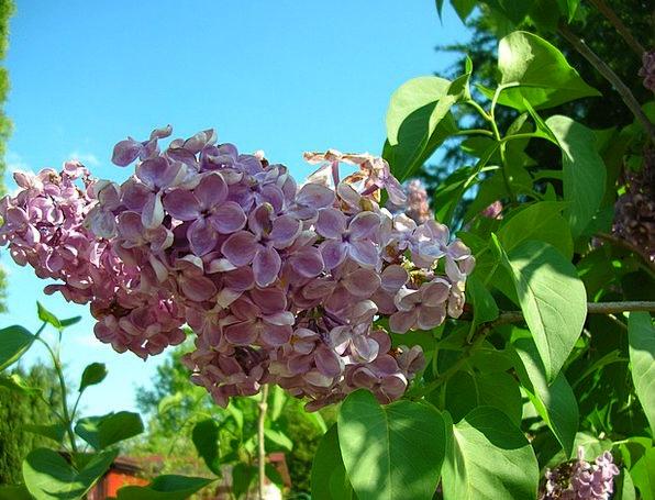 Without Deprived of Landscapes Plot Nature Violet