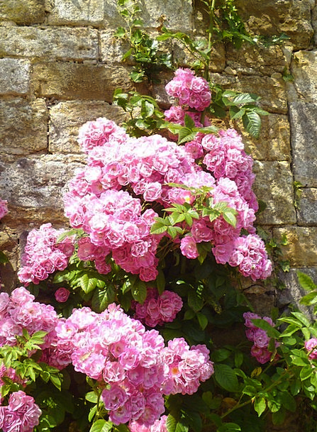 Rose Design Wildflowers Weeds Flowers Botanical Ro
