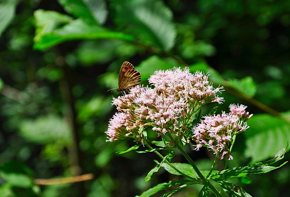 Butterfly Landscapes Woodland Nature Insect Bug Fo