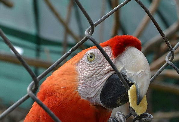 Macaw Imitator Exotic Bird Parrot Cage Birdcage Zo