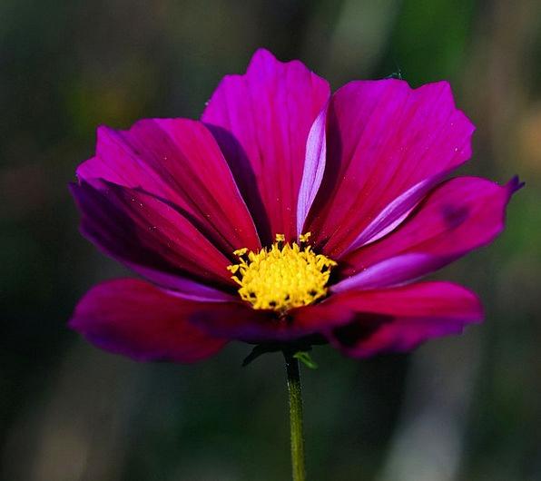 Flower Floret Landscapes Nature Bloom Wild Flower