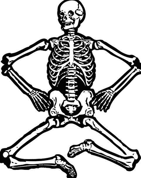 Skeleton Minimum Bones Frames Human Skeleton Skull